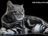 01_BillyHoliday_BKH_tabby_blotched