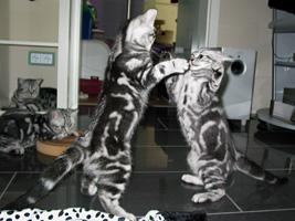 BKH Kitten Spielen