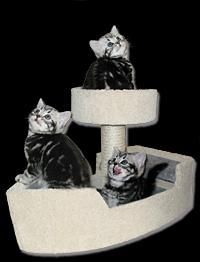 Kitten Kratzbaum mit Britisch Kurzhaar Kitten