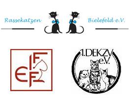 Verein Katzen Britisch Kurzhaar