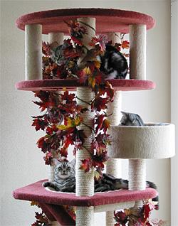 Katzen Kratzbaum von Catsvillage.de